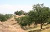 Valencia Summit-park-hills-and-oaks