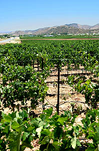 Agua Dulce Vineyard and Agua Dulce homes
