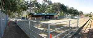 Acton Horse facilities